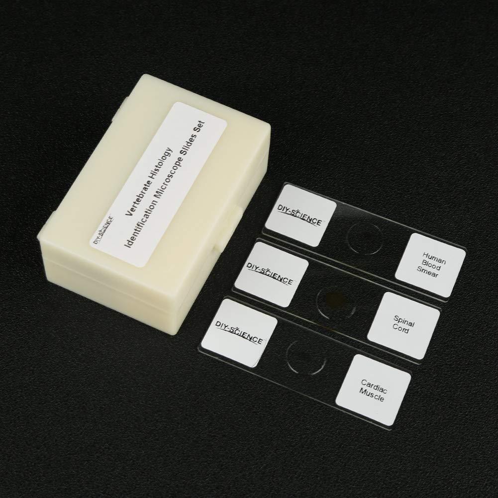Prepared Vertebrate Histology Identification Microscope Slide Set 12pcs Slides Set for Students