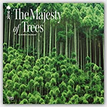 The Majesty Of Trees 2016 Square 12x12 Wall Calendar