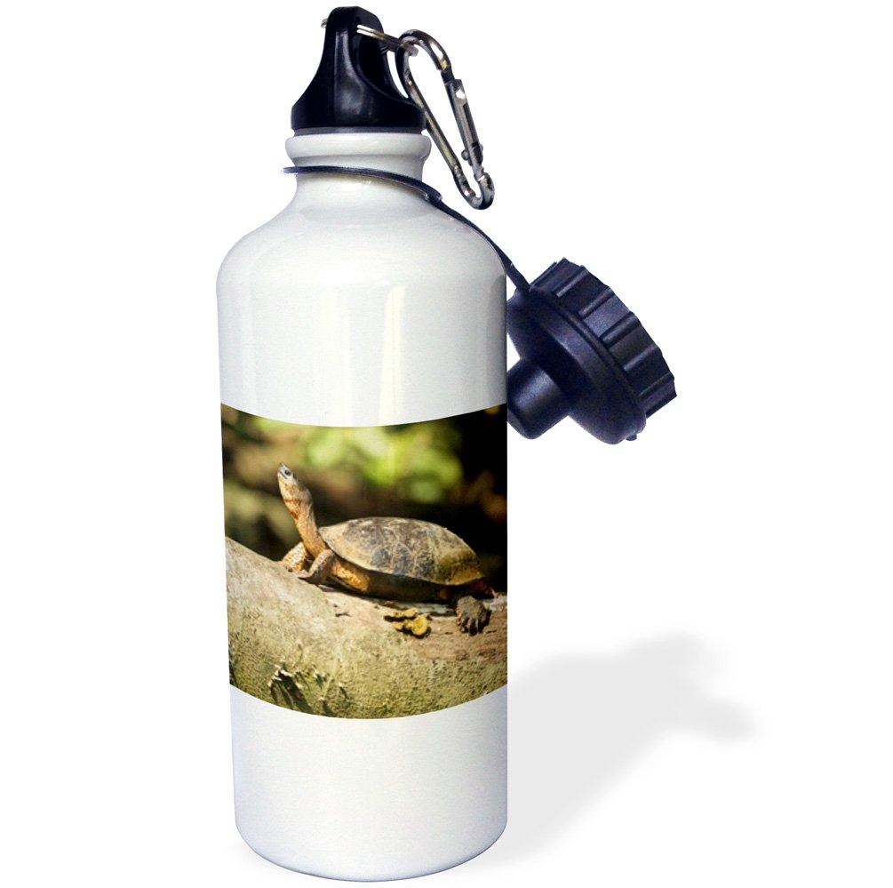3dRose wb_87193_1 ''Costa Rica. Black Wood Turtle SA22 JMC0020 Joe and Mary Ann McDonald'' Sports Water Bottle, 21 oz, White