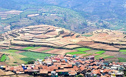 Home Comforts LAMINATED POSTER Farm Terraced Rice Terraces Terrace Cultivation Poster 24x16 Adhesive Decal - Terraced Rice