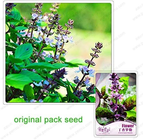 35 semillas / pack, semillas de clavo de albahaca, albahaca, plantas de jardín bonsai semillas de flores, plantas bonsai Balcón: Amazon.es: Jardín