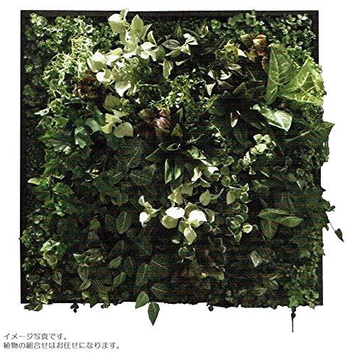 人工観葉植物 アーティフィシャルグリーンアレンジ壁面植裁 □78cm rg-016 B074FXFMV2