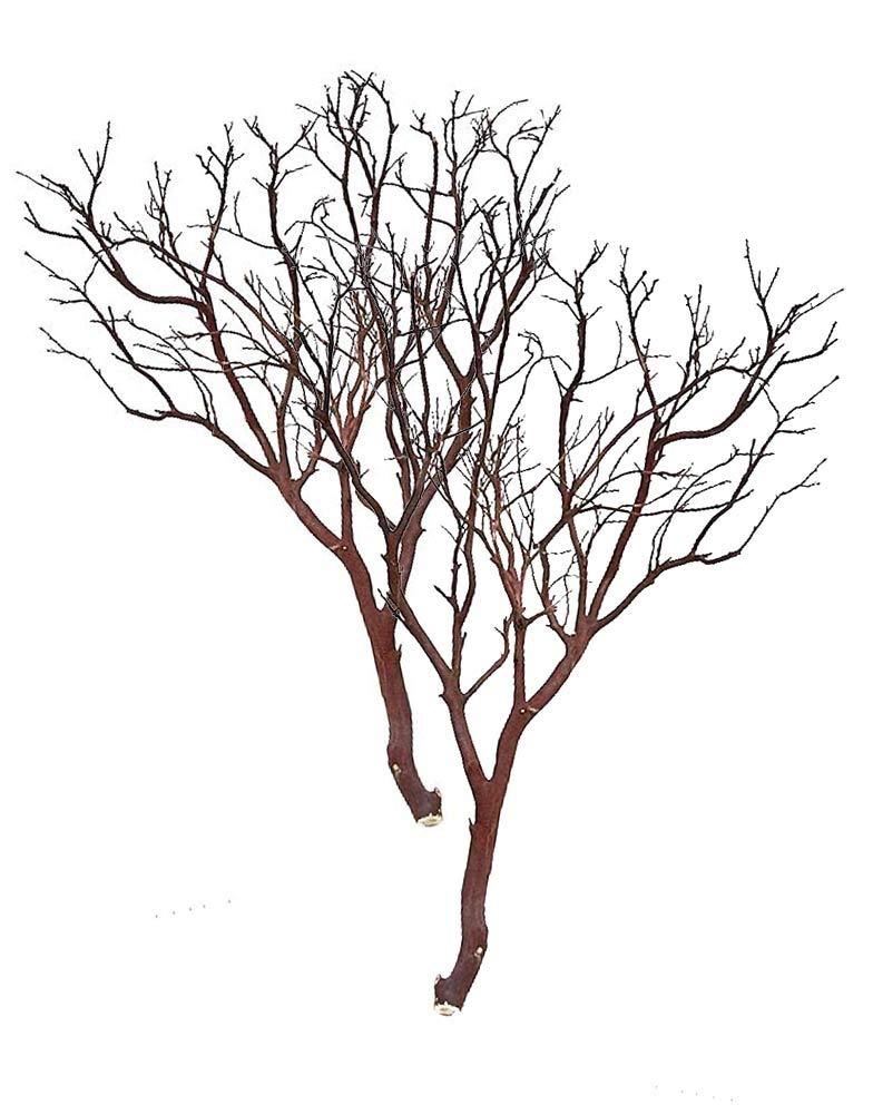 Blooms & Branches Manzanita Branches Case of 2 Pieces (24'')