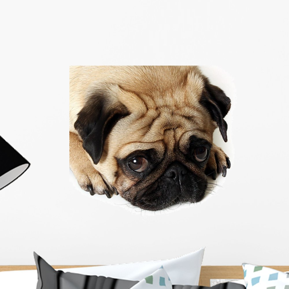 18 in W x 14 in H Wallmonkeys Sad Eyes Wall Decal Peel and Stick Graphic WM58006