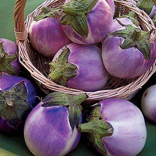 Round Mauve Eggplant Seeds Very Beautiful & Tasty! Compact Plant! (5 - Seeds) AKE -32