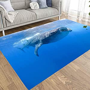 Colorful Area Rugs,Doocilsh 2X3 Area Rug of Indoor Outdoor Kids,Boys,Girls Area Rugs Use Whale Sharks Swimming in Blue Waters Mexico Mujeres