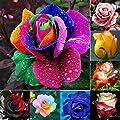 Dasado 100Pcs/Pack 10 Types New Nice Adorable Flower Fragrant Seeds Fragrant Blooms Rose Seeds