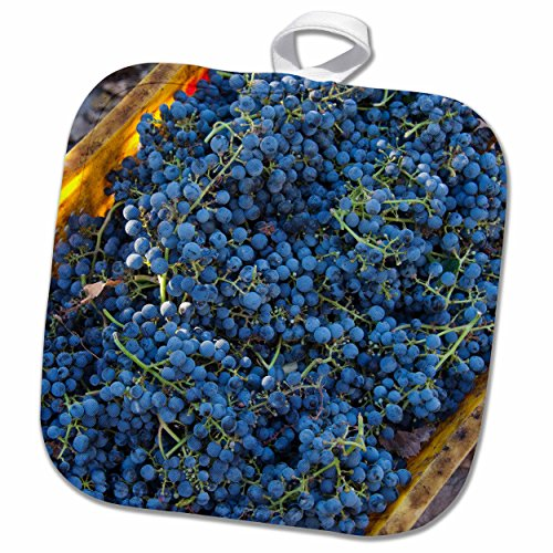 3drose-danita-delimont-grapes-china-xinjiang-manas-cabernet-sauvignon-grapes-from-a-vineyard-8x8-pot