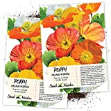 Seed Needs, Iceland Poppy Mixture (Papaver nudicale) Twin Pack of 10,000 Seeds Each