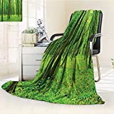 YOYI-HOME Digital Printing Duplex Printed Blanket Illuminating The Forest Springtime Fresh Air Landscape Picture Accessories Lime Green Summer Quilt Comforter /W79 x H59