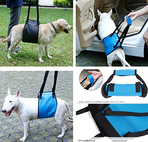 Help Getting Up Stairs For People With Limited Mobility: Dog Support Dog Lift Harness With Handle Dog Mobility