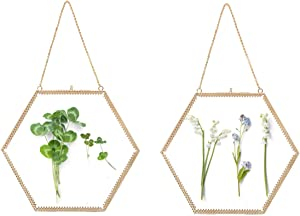 LONGWIN 2pcs Glass Frame for Pressed Flowers Gold Hexagon Shaped Hanging Wall Decor Floating Frame for Dried Leaf Plants Specimen Herbarium Artwork Double Side Glass Frame, Glass Frame Only 9.4in