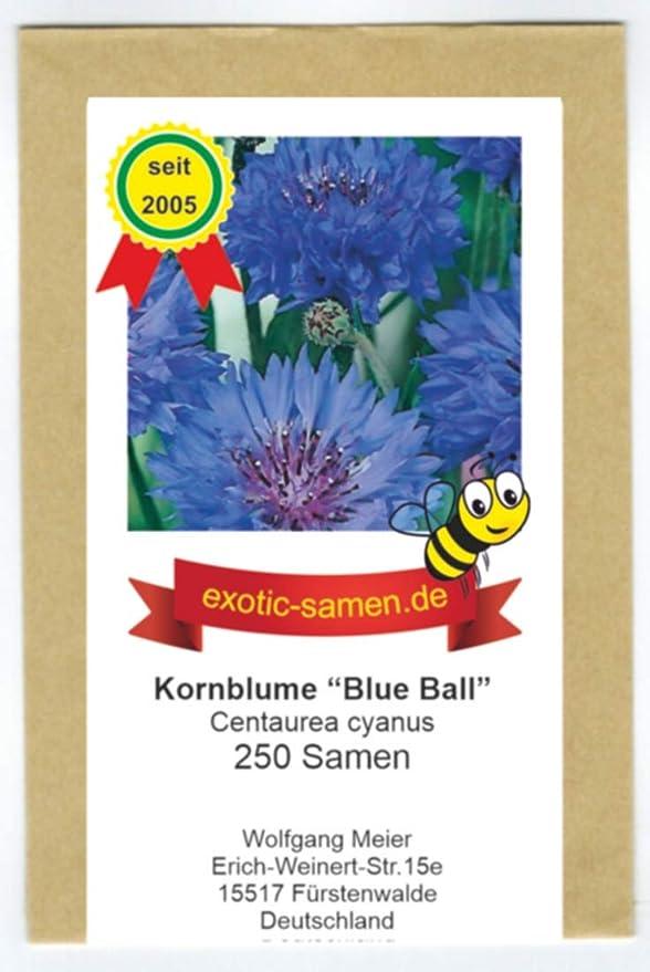 1000 Samen Kornblume ca