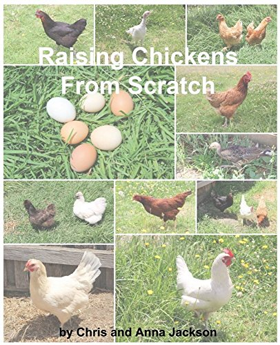 Raising Chickens From Scratch: A Beginners Guide On Raising Backyard Chooks From A Beginner by [Jackson, Chris]