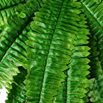 315-Artificial-Boston-Fern-Fake-Grass-Leaves-Plant-Greenery-Outside-Planter-for-Home-Indoor-Garden-Office-Party-Decor