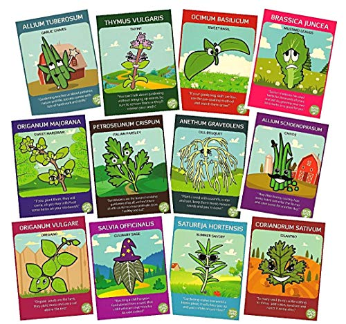 Zziggysgal Herb Seeds Set, Non GMO, Easy to Follow Instructions (12 Varieties) (Tips For Planting Grass Seed In Summer)