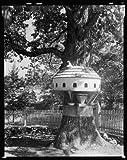 Photo: Melrose,Yanceyville,birdhouses,trees,NC,North Carolina,Architecture,South,1938