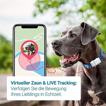 Empfohlen von Martin R/ütter Aktivit/ätstracking Modell 2019. Hundeortung Tractive GPS Tracker f/ür Hunde wasserfest unlimitierte Reichweite