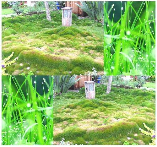Zoysia Sod Grass - 8