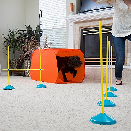 Indoor agility training for dogs