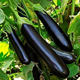buy NIKITOVKASeeds - Eggplant - Aubergine Long-Pop - 400 Seeds - Organically Grown - Non GMO now, new 2020-2019 bestseller, review and Photo, best price $5.49