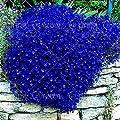 100 pcs/Bag Blue Rock Cress Seeds Perennial Ground Cover Flower, Natural Growth for Home Garden