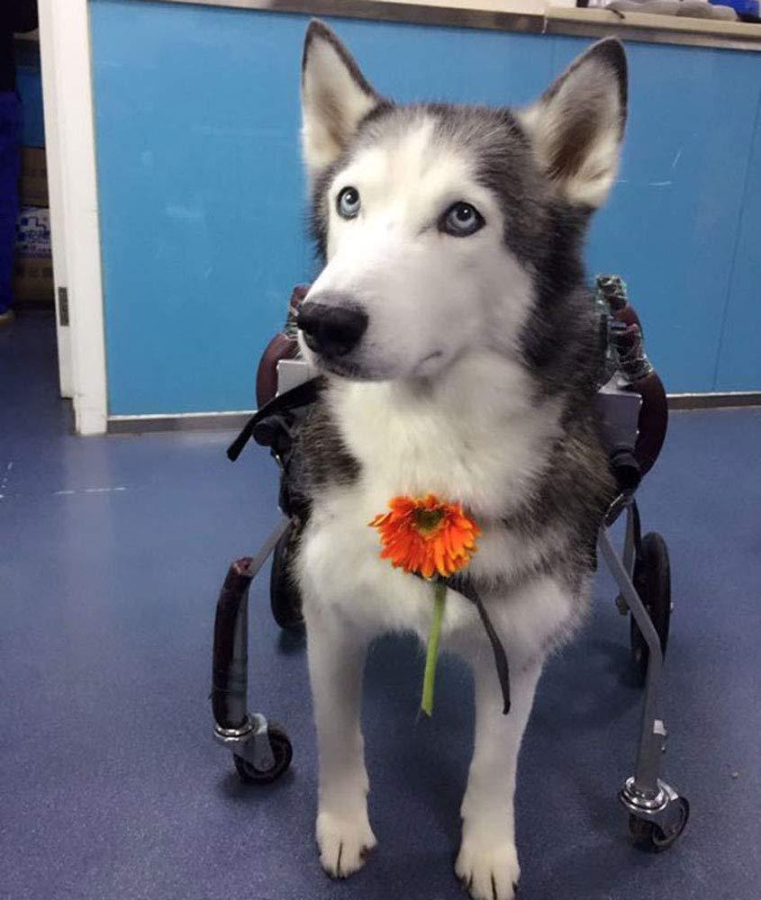 Carrito para perros, adecuado para mascotas patas traseras para practicar la discapacidad de las extremidades para ayudar a caminar, perros pequeños grandes ...