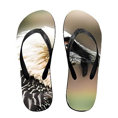 e01815c08bb Amazon.com | FSFFDFEEE Kookaburra Bird Perched Beach Slippers for ...