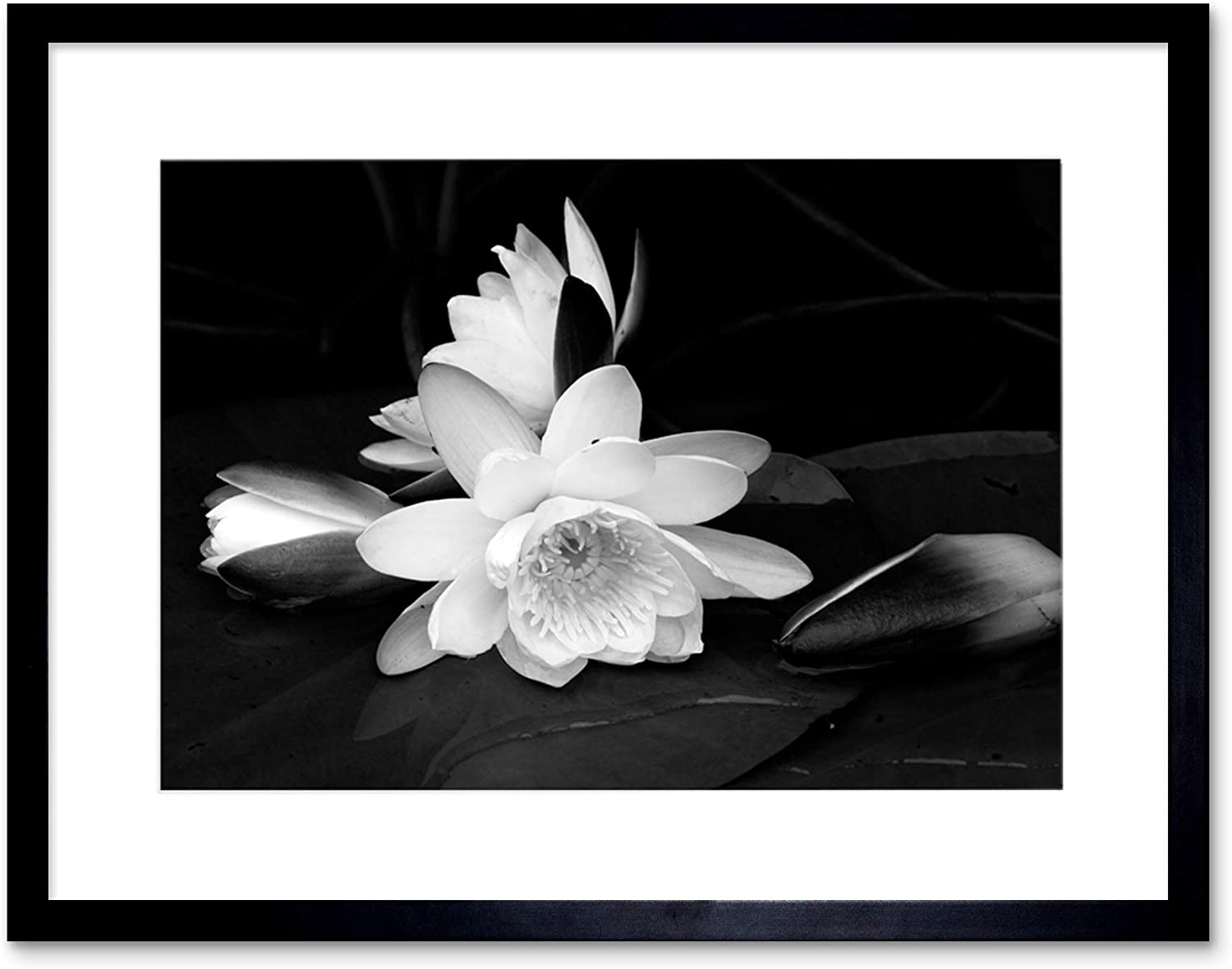 Amazon Com White Flower Bloom Black Background Framed Art Print Picture B12x9435 Posters Prints