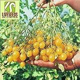 Liveseeds - Tomato - Llidi - 35 Seeds