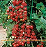 Heirloom 'Suncherry Premium' F1 Organic Tomato Seed, 100 Seeds/Pack, Small Cherry Fruit Tomato Seed-Land Miracle