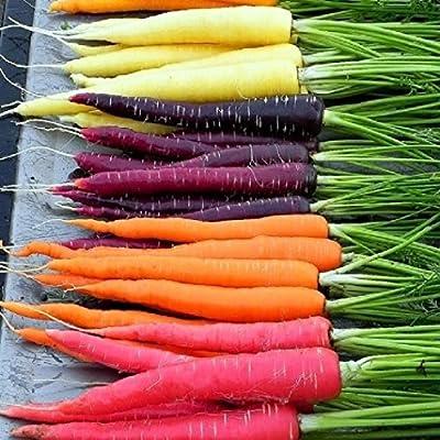 David's Garden Seeds Carrot Rainbow Blend DAR123NB (Multi-Colors) 500 Open Polinated Seeds