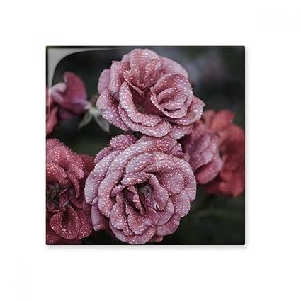 Azulejos De Ceramica Para Pared Con Diseno De Rosas Rosas Rosas - Diseos-de-rosas