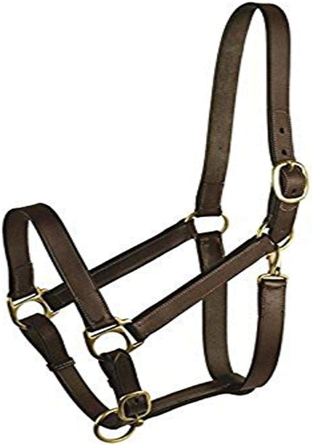 Royal King Leather Track Halter Weanling