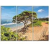 Design Art Green Tree on Beach in Kauai Hawaii Contemporary Seascape Art Canvas/Seashore on Canvas Art Wall Photgraphy Artwork Print