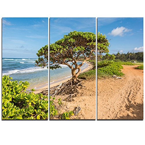 Design Art Green Tree on Beach in Kauai Hawaii Contemporary Seascape Art Canvas/Seashore on Canvas Art Wall Photgraphy Artwork Print by Design Art