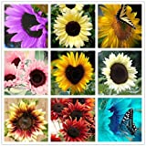 40 pcs/bag sunflower seeds,sunflower seeds for planting,bonsai flower seeds,10 colours,Natural growth for home