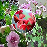 2015 1000pcs Oxalis seeds, Chinese family Chinese flower seeds (Mix minimum order$6) Bonsai Plant