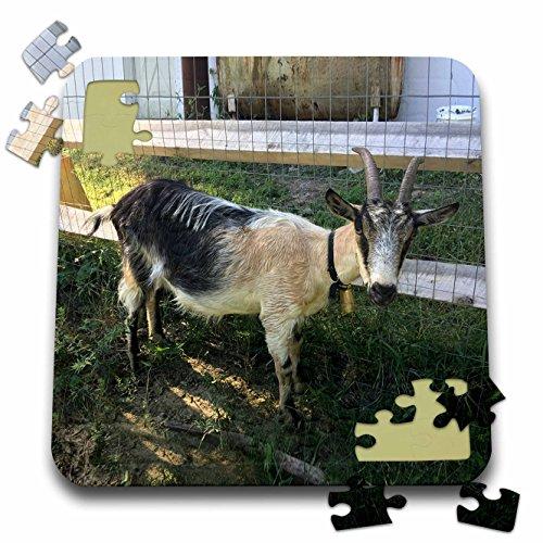 Price comparison product image BrooklynMeme Farm Animals - Goat white and black - 10x10 Inch Puzzle (pzl_256636_2)