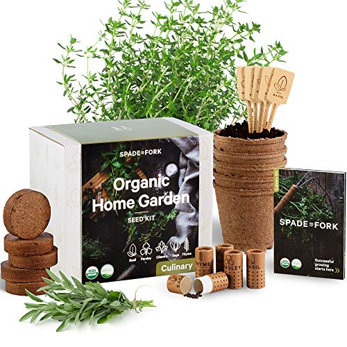 Indoor Herb Garden Starter Kit - Certified 100% USDA Organic Non GMO - Potting Soil, Peat Pots, 5 Herb Seed Basil, Cilantro, Parsley, Sage, Thyme - DIY Kitchen Grow Kit for Growing Herb Seeds Indoors (Fresh Herb Container Garden)