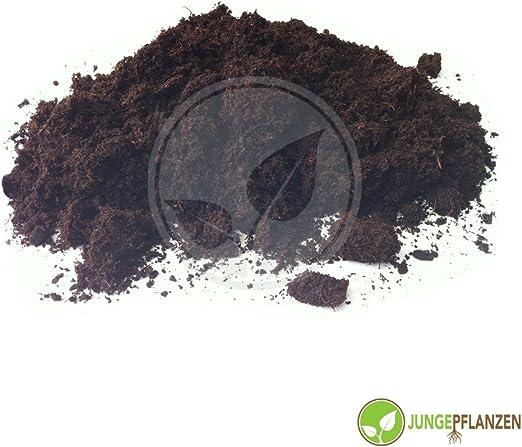 jungepflanzen Sustrato - Tierra Blanca 10 litros: Amazon.es: Jardín