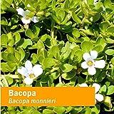 Herb Pharm Certified Organic Bacopa Liquid Extract