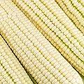 Silver King Hybrid Corn Garden Seeds - Non-GMO Vegetable Gardening Seeds - White Sweet Corn (SE)