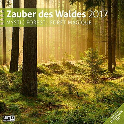 Zauber des Waldes 30 x 30 cm 2017