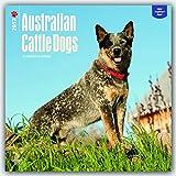 2017 Monthly Wall Calendar - Australian Cattle Dogs