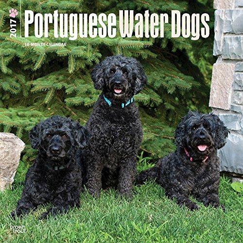 portuguese water dog calendar - 2