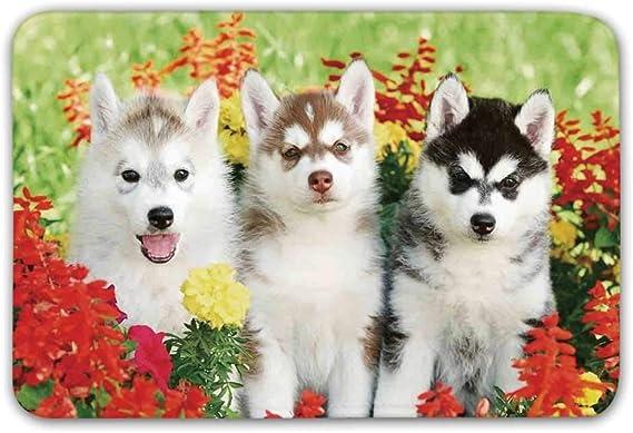 Felpudo perro Husky | Perro husky, Perros, Felpudos