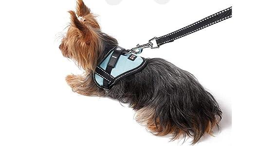 WILRND Home Cuello de Gato para Perro Cinturón de Seguridad ...