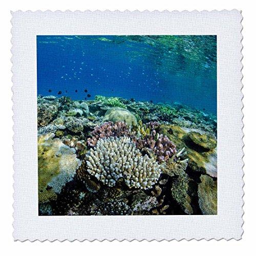 3D Rose Coral Reef Diversity Fiji Underwater Quilt Square, 25 x 25 - Fiji Comforter