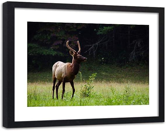 Affiche Cadre Noir Nature Image Photo Art Cerf Animaux Foret Vert 60x40 Cm Amazon Fr Cuisine Maison